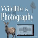 Wildlife and Photography