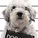 Dog With Blog