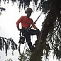 Arborist_fi
