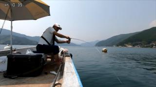超清晰的筏钓黑鲷竿尖动作,提竿溜鱼,看着就手痒!