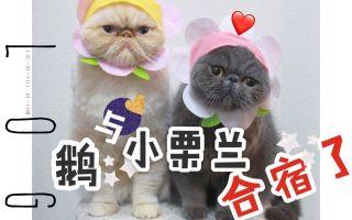 Vlog #1 | 北京 | 0301| 考完专八留京奋斗的石原鹅与小栗兰合宿了♥