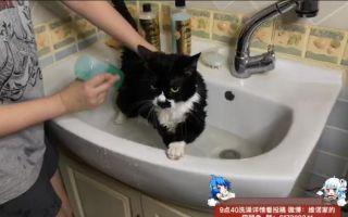 【维诺家的猫鼠兔】7月14日直播录像:今天给豆丁洗澡啦