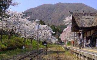 【超清日本】福島・ 桜の湯野上温泉駅