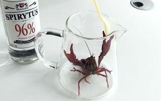 给小龙虾喝96°的生命之水,瞬间就上头了