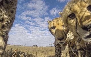 (重发)【猎豹】被非常豹包围不知所措