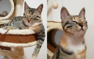 留守小猫:一个猫也要好好生活