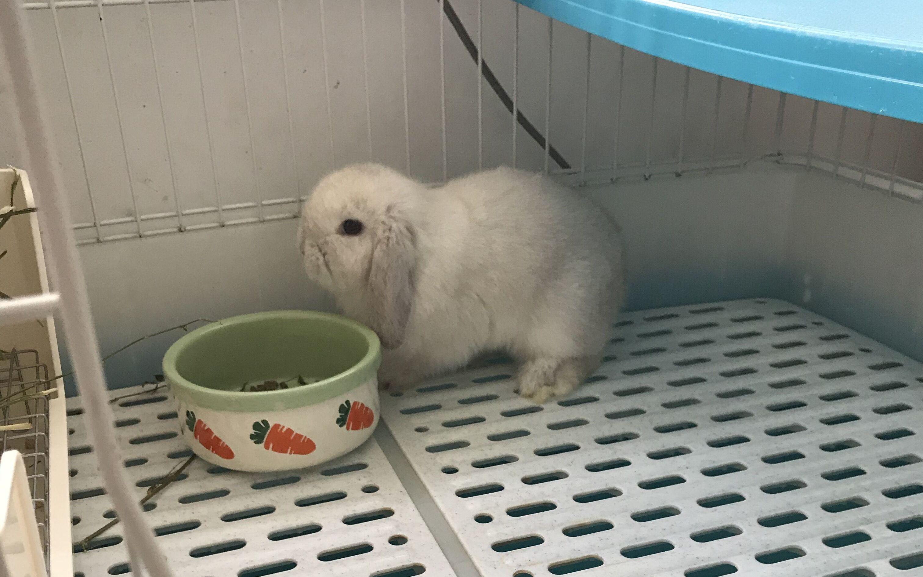 【垂耳兔】新到家的兔子_嗶哩嗶哩 (゜-゜)つロ 干杯~-bilibili