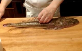 【日料刀工系列】鲬(牛尾鱼)薄切刺身分解