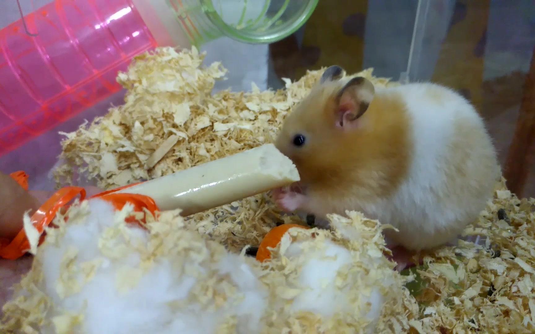 火腿好美味~第一次吃火腿的小激動_嗶哩嗶哩 (゜-゜)つロ 干杯~-bilibili