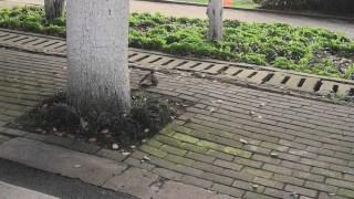 【不知道什么鸟】两只鸟打架,打的投入的都不怕人了,打到一半还专门停下来看了路人一眼,然后继续打