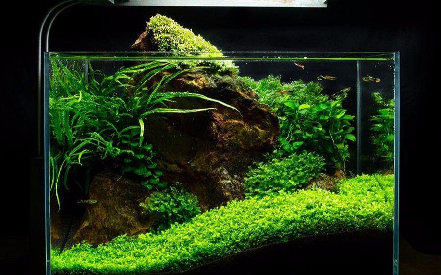水草缸造景教程:綠色車間畫廊的迷你水草缸開缸全過程_野生技術協會_科技_bilibili_嗶哩嗶哩