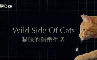 【纪录片】猫咪的秘密生活.Wild.Side.of.Cats.【3E帝国字幕组-中文特效字幕】