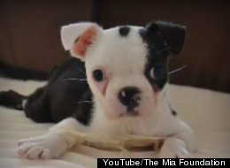 Little Mick did the unthinkable when he learned to sit up on his own and even to run. (YouTube)