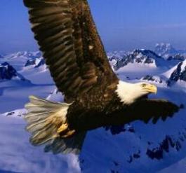 被折斷翅膀的雄鷹 - 每日頭條