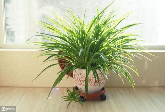 適合室內養護的花草。來看看你養的有哪些? - 每日頭條