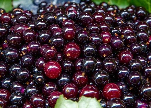 養肝吃什麼水果好呢? - 每日頭條