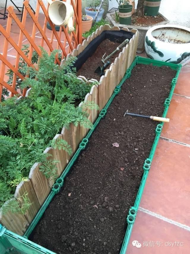 陽臺種菜種植有機菜用什麼土與肥料 - 每日頭條