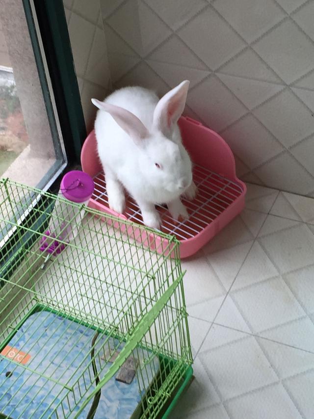 怎麼養寵物兔子 - 每日頭條