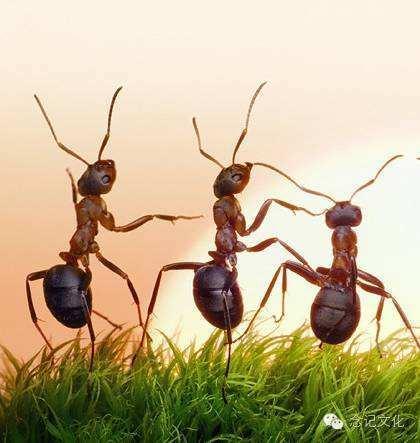 了解螞蟻的習性,才能有效的對付它!卡爾科學實驗室第205期 - 每日頭條