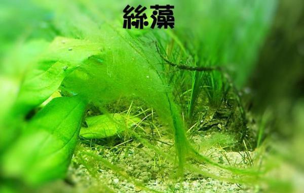 家居水景丨如何有效清潔水族缸藻類的方法 - 每日頭條