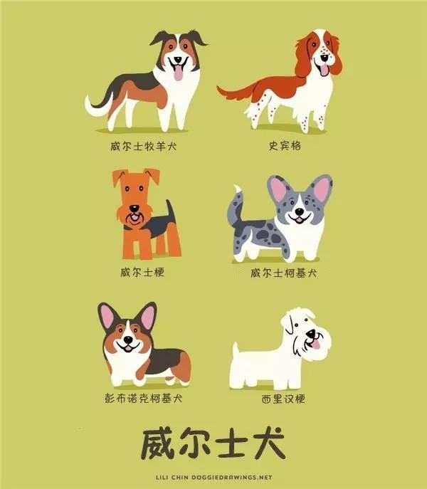 《全世界的狗狗》的系列畫作.超過100個品種的狗狗.快來漲漲 - 每日頭條
