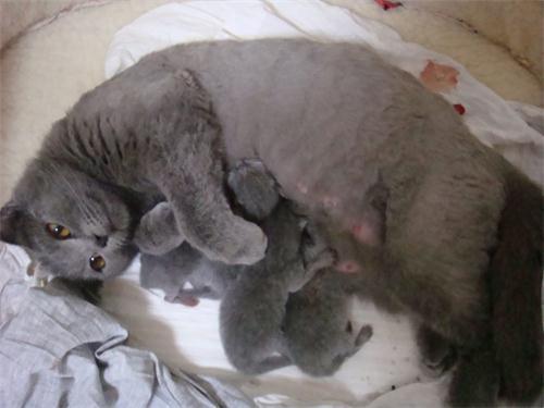 如何照顧好孕期貓咪 - 每日頭條