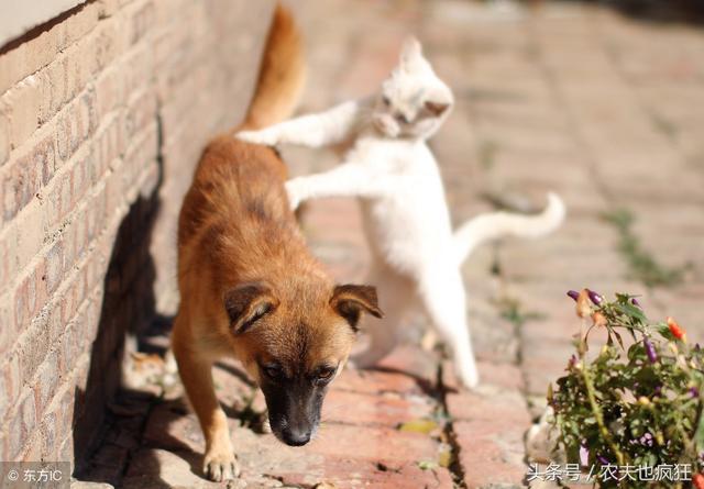 老話說「好狗不在家中死」。土狗臨死前會離開家。真的是這樣嗎 - 每日頭條