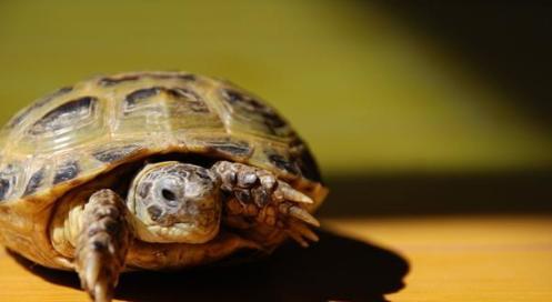 烏龜也會脫殼嗎? - 每日頭條