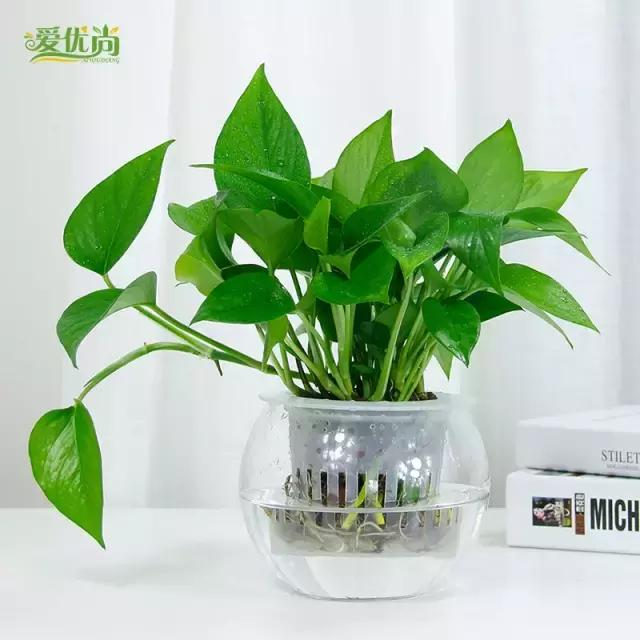 簡單易養的水培植物 - 每日頭條