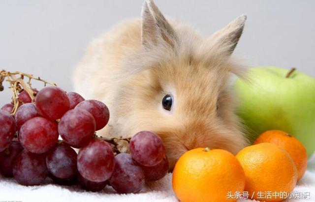 如何正確的飼養兔子 - 每日頭條