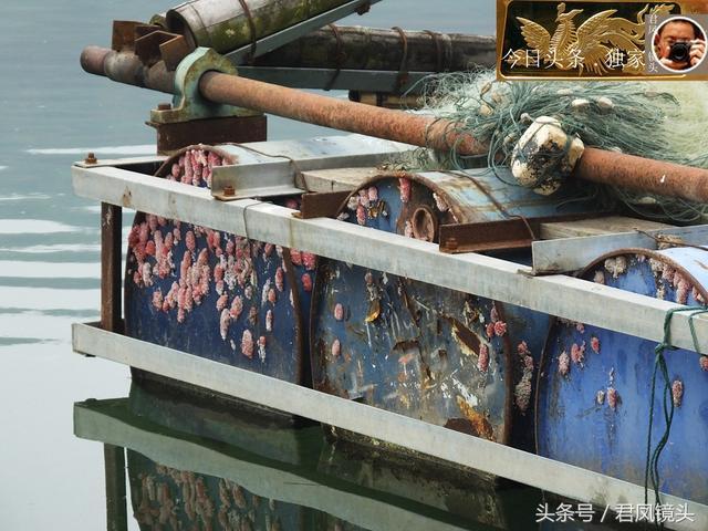 湖北宜昌:福壽螺竟然在漁船上產卵!福壽螺的故鄉在哪兒? - 每日頭條
