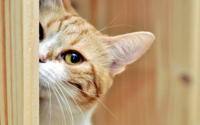 給貓貓取名字大全之:可愛的貓咪名字有哪些? - 每日頭條