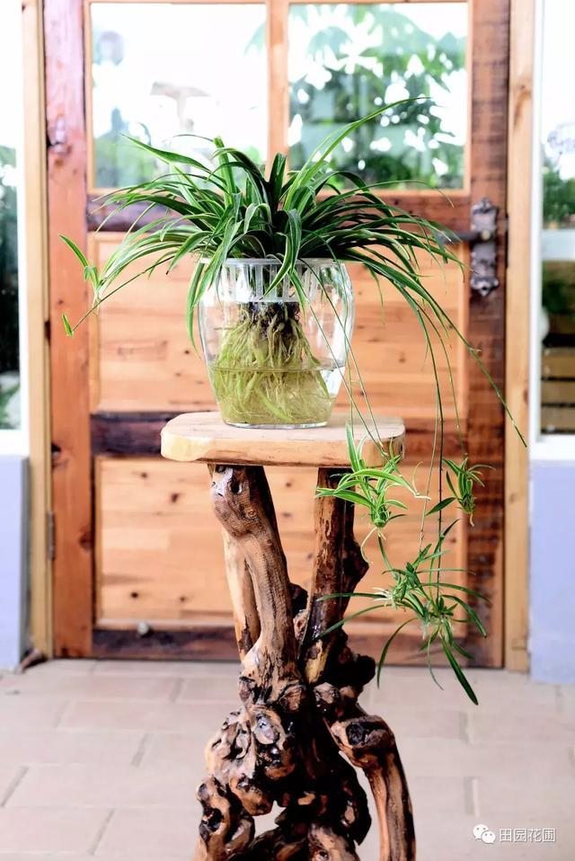 植物風水說:選對植物擺對位置,好運不請自來 - 每日頭條