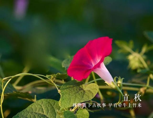 「詩詞鑑賞」一夜新涼是立秋,邂逅最美的立秋詩詞 - 每日頭條