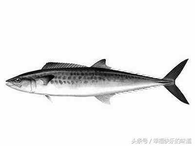寧波每月吃什麼海鮮最好?時令海鮮別錯過! - 每日頭條