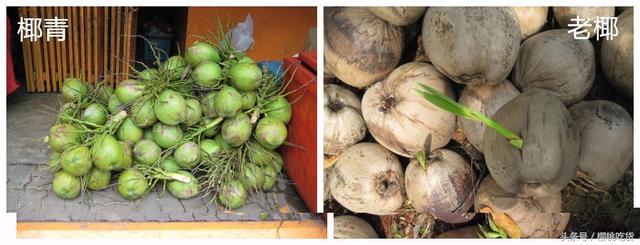 老椰還是椰青?椰子身藏這些秘密 - 每日頭條