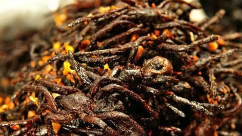 雲南的昆明宴。竹蟲、水蟑螂、蝗蟲。哪一樣你敢吃? - 每日頭條