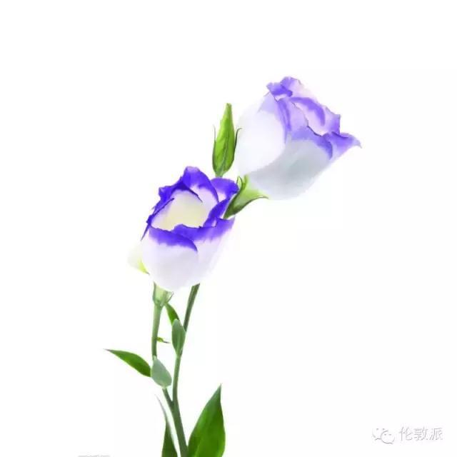 當迎來最美的春天。家裡擺什麼花才有格調? - 每日頭條