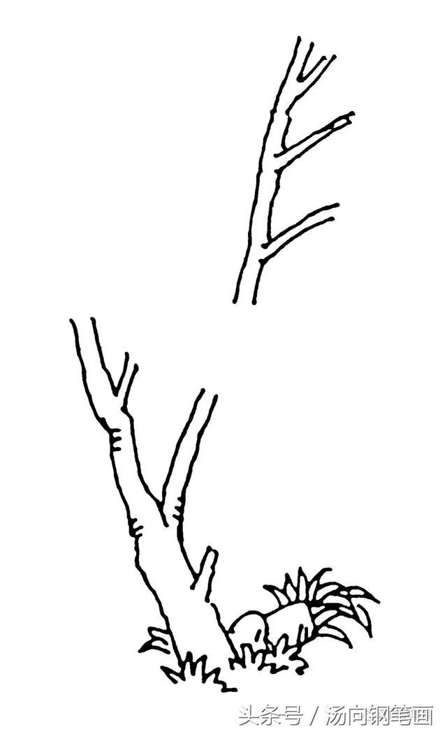 學鋼筆畫202夏日楓樹……看看畫得如何? - 每日頭條
