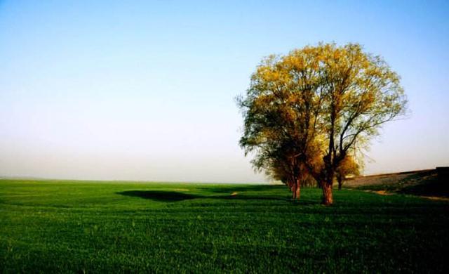 植樹節的由來 - 每日頭條