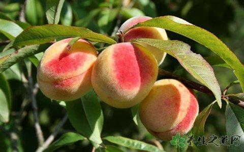 桃子的功效與作用 - 每日頭條