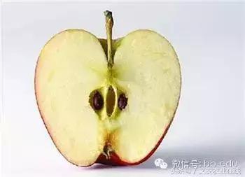 這些水果千萬別嚼核 種子藏毒堪比砒霜 - 每日頭條