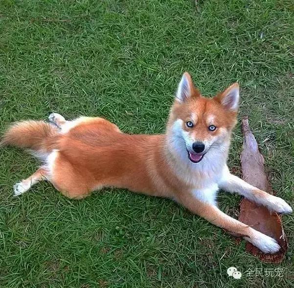 你見過有哪些混種狗是驚為天「狗」的? - 每日頭條