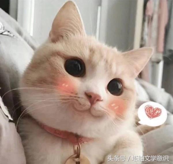 可愛貓咪閨蜜頭像 - 每日頭條