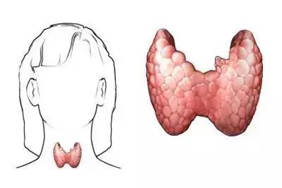 體檢發現甲狀腺結節到底是多大的事? - 每日頭條