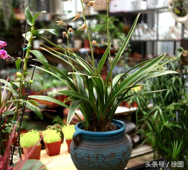 中國蘭花的象徵比喻:美好,象徵. 1,太香了 - 每日頭條
