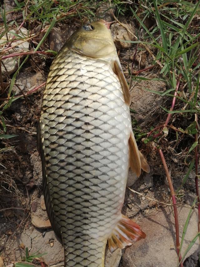防控全面升級 堅持就是勝利!這些釣魚知識也重要 - 每日頭條