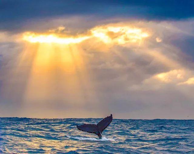望洋鯨嘆,澳洲海岸線的饋贈 - 每日頭條