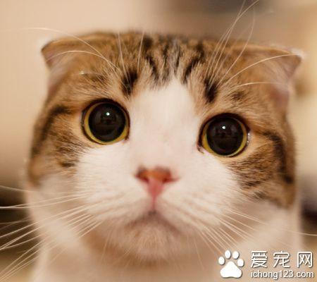 小貓喜歡吃什麼 貓兒喜歡少吃多餐 - 每日頭條