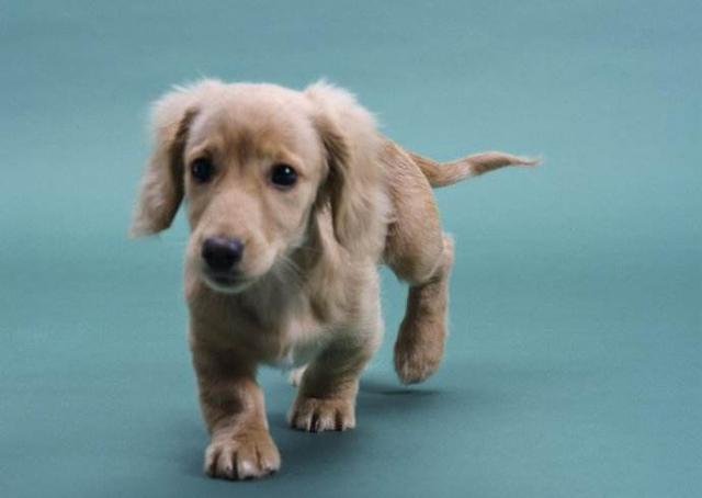 怎麼訓練狗狗大小便 - 每日頭條